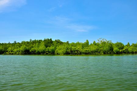 Mangroves and sea