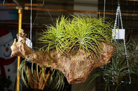 Ornamental plants on background