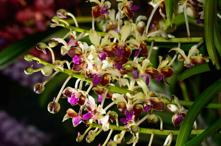 branch of orchid on background