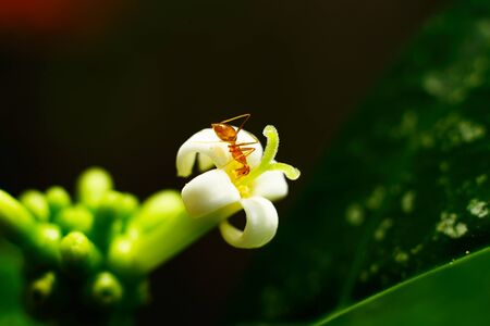 ant on a white flower. macro Stock Photo