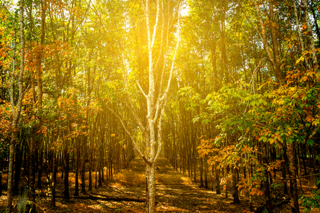 Sunny forest early in the morning Stock Photo