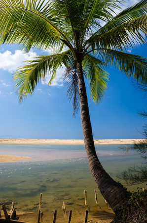 Coconut palms on the beach and blue sky. Stock Photo