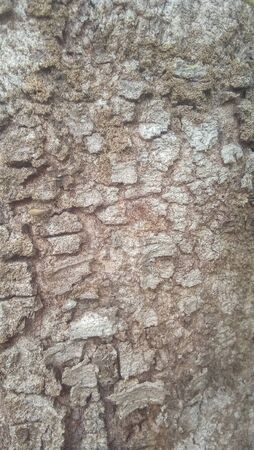 Texture background of the bark of a tree