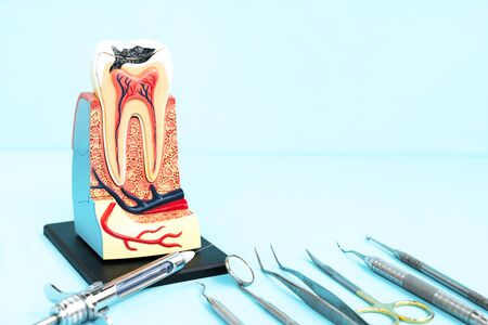 tooth anatomy on blue background. Stock Photo