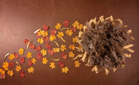 Beautiful Newborn Backdrop Photography with Colored leaves