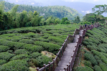 Tea garden with middle wooden stairs Stock Photo