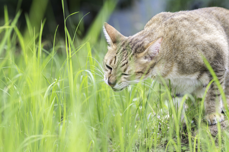 ottimo: Gatto mangiare erba in campo Con il sole di notte