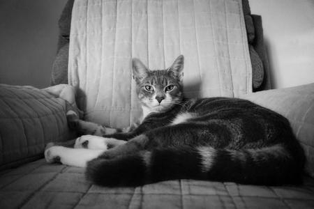 cat portrait Imagens