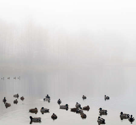 early morning landscape over foggy misty lake with duck