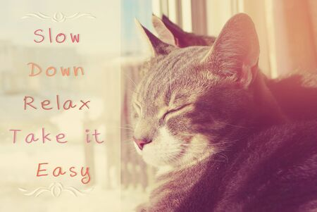Slow Down, Relax, Take it Easy