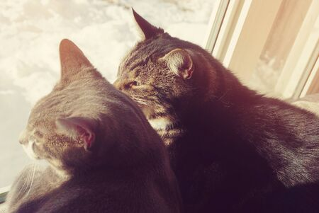 behind the scenes: Two cats sit on window and looking outside
