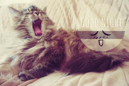 Cat yawning with good night word