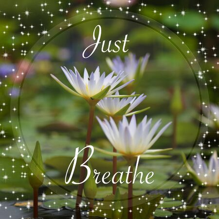 Just breathe words on lotus background 스톡 콘텐츠