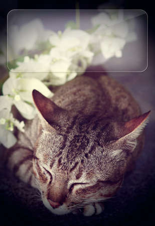 wide eyed: cat sleeping with white flowers - copy space