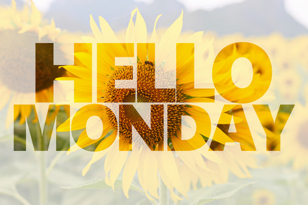 Hello Monday word on sunflower background