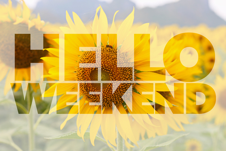 long day: Hello Weekend word on sunflower background Stock Photo