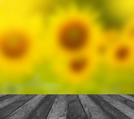 flowers sun: blurred image of sunflower on concrete table