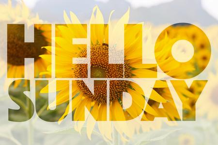Hello Sunday word on sunflower background Stock Photo