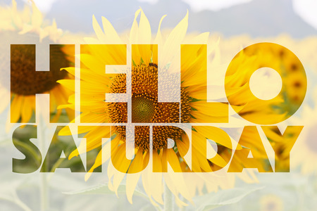 Hello Saturday word on sunflower background Фото со стока