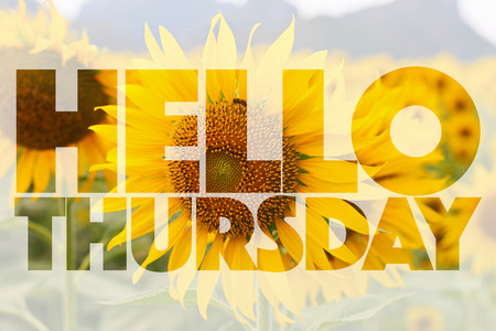thursday: Hello Thursday word on sunflower background