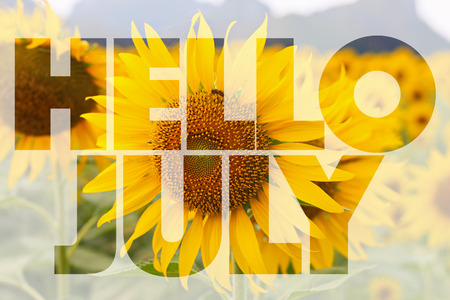 Hello July word on sunflower background Standard-Bild