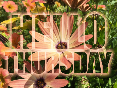 Hello Thursday word on flowers background