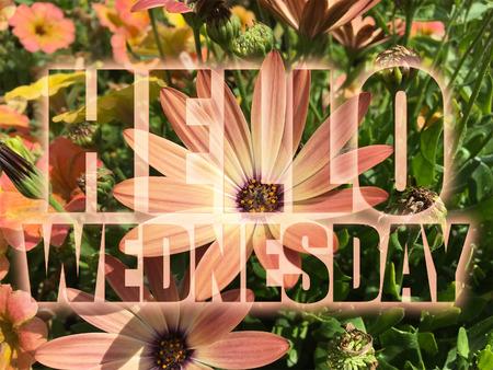 wednesday: Hello Wednesday word on flowers background Stock Photo