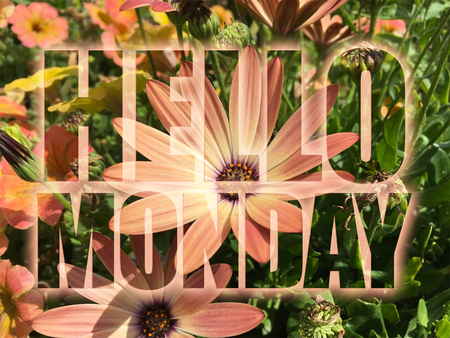 Hello Monday word on flowers background