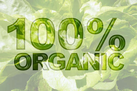 romaine: Romaine lettuce green vegetable texture background with word 100% Organic