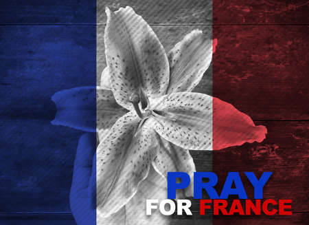 hand holding flower: France national flag with hand holding flower with word Pray for France