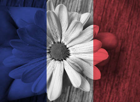 hand holding flower: France national flag with hand holding flower for peace