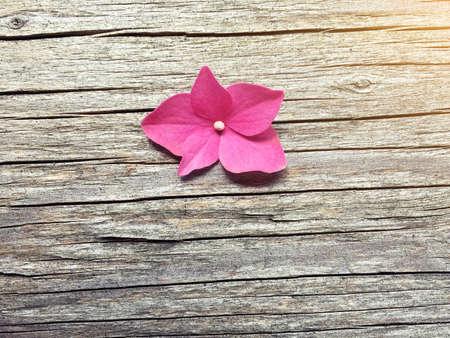 pink flower on wooden background with copy space Reklamní fotografie