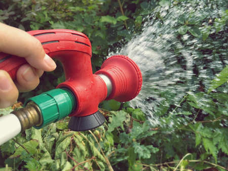 Gardening and watering plants in garden