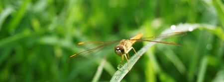 dragonfly on nature green nature background