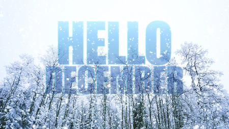 Hello December words on winter background