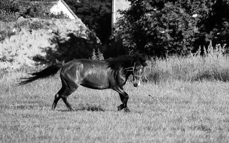 gefesselt: Gebunden Pferd Lizenzfreie Bilder