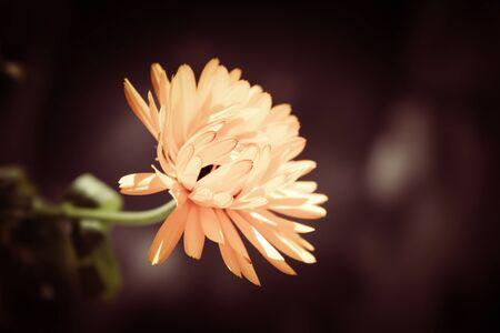 sun lit: Flower lit  by sun