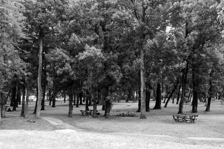 serbia: Park in Sabac, Serbia