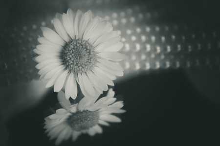 delicate: Delicate
