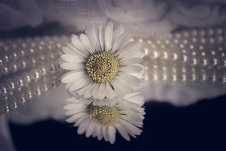 delicate: Soft and delicate Stock Photo