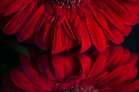 reflection: Petals reflection