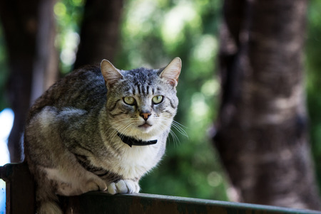 resting: Cat  resting on fence Stock Photo
