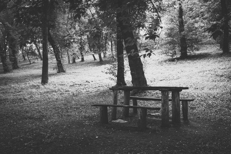 Empty benches and table in forest