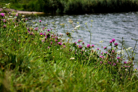 Wild flowers by the lake