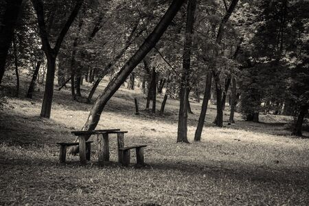 Forest  and benches Banque d'images