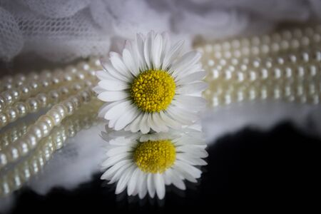 Daisy and pearls Banque d'images