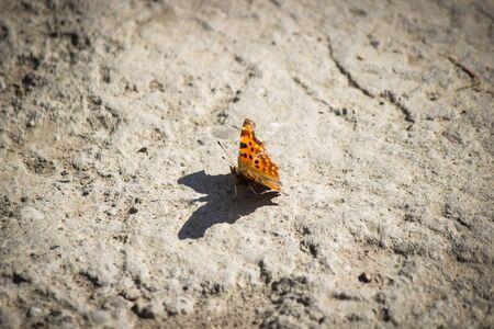 Papillon reposant Banque d'images - 75610975