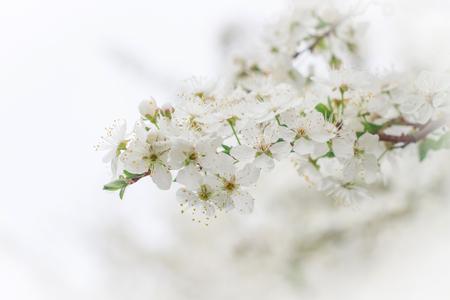 Fleurs de printemps Banque d'images - 75610990