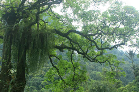 Beautiful and dramatic tropical forest area for memorable and romantic natural scenery photos.