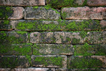 hinder: Brick wall background texture with moss
